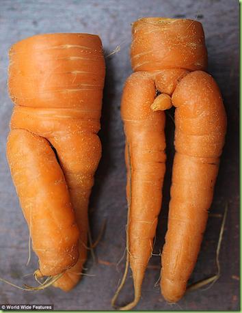 man carrot
