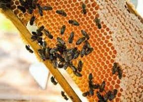 Amazing Pictures of Animals, Photo, Nature, Incredibel, Funny, Zoo, Bee, Insetcs, Anthophila, Alex (14)