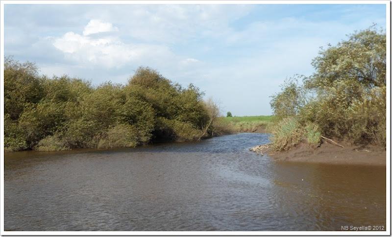 SAM_3028 River Wharfe