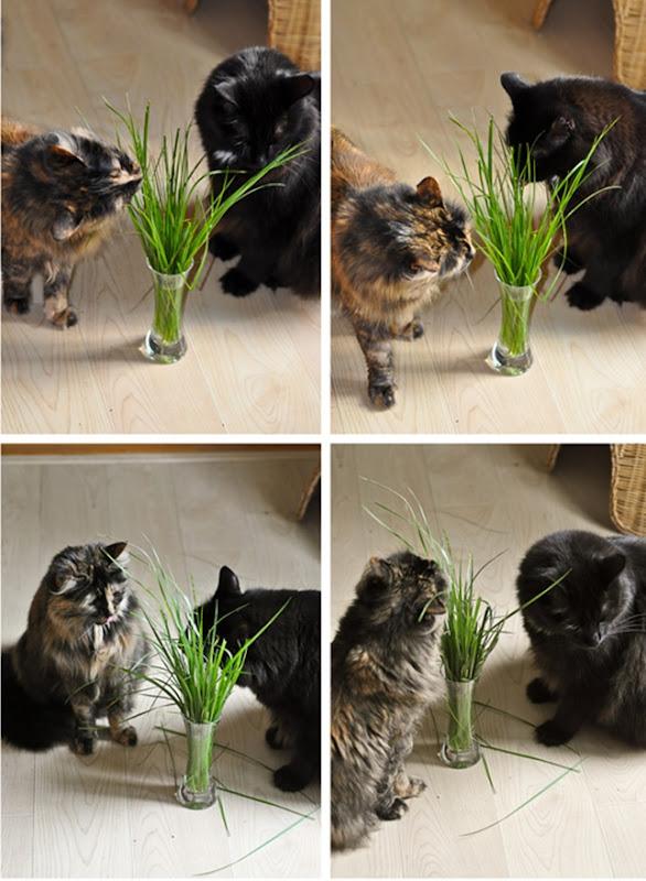veggie_cats_1LR