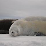 Antarctica III
