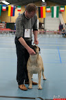 20130511-BMCN-Bullmastiff-Championship-Clubmatch-2044.jpg