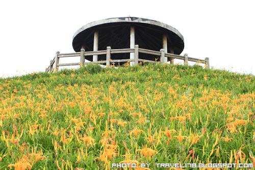 【台東賞金針花景點】台東太麻里金針山~最傲人的雙乳峰(千禧亭,曙光亭)