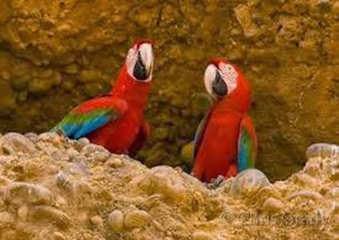 Amazing Pictures of Animals, Photo, Nature, Incredibel, Funny, Zoo, Red-and-green Macaw, ara chloropterus, Bird,  Alex.  (21)