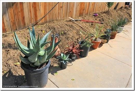 140315_desert_garden_planting2