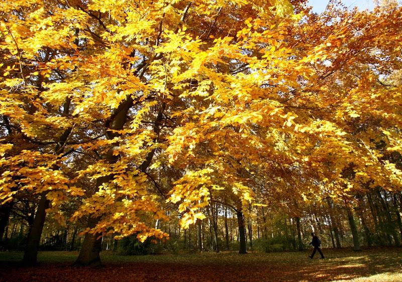 yellow_004.jpg