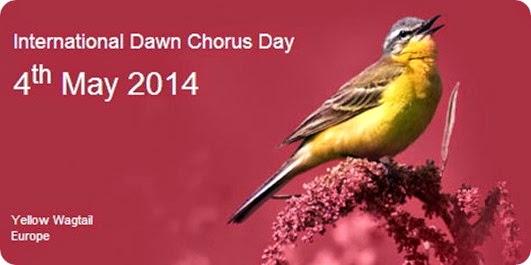 dawn chorus 2014