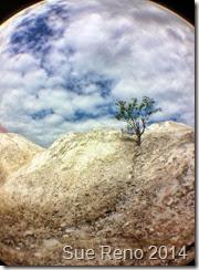 Sue Reno, The White Cliffs of Conoy, Image 1
