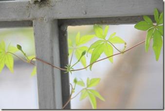 Jardim 19-12-2011 011