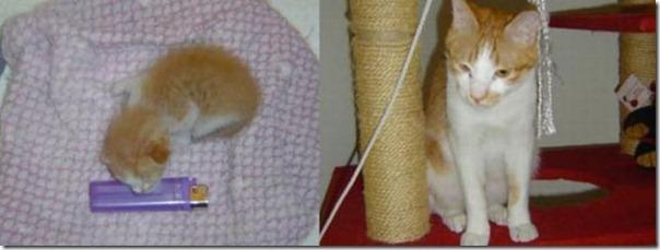 Animais Antes e Depois do Resgate (25)