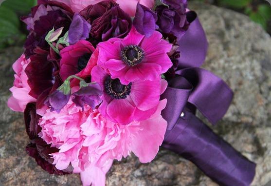 285098_10150252909506806_370258671805_7765560_5603548_n fleursfrance.wordpress fleurs de france