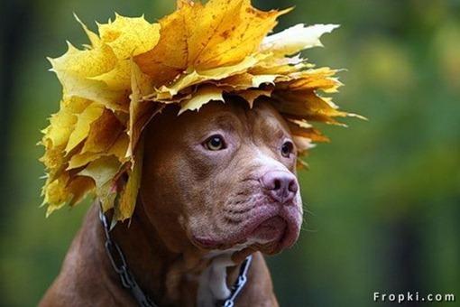 Осенняя рапсодия.