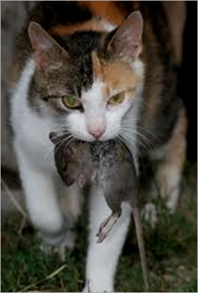 comiendo ratones - copia