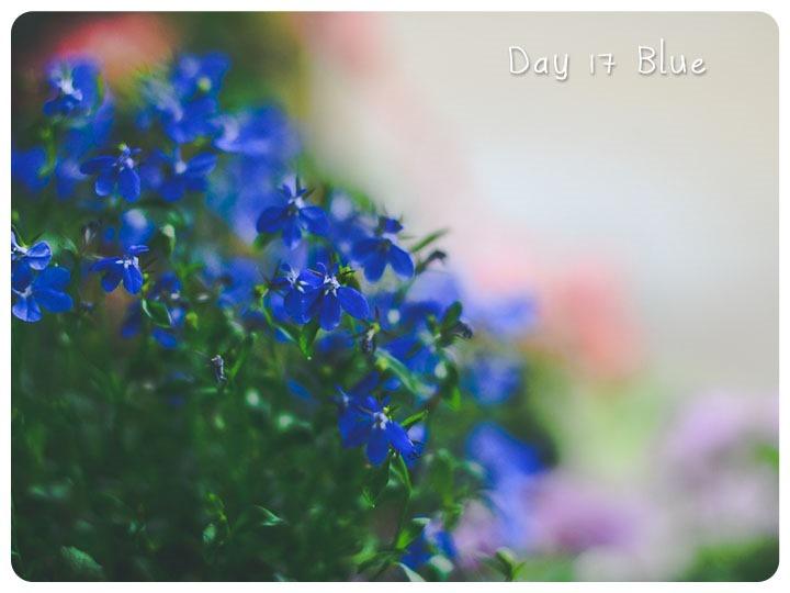 17 blue