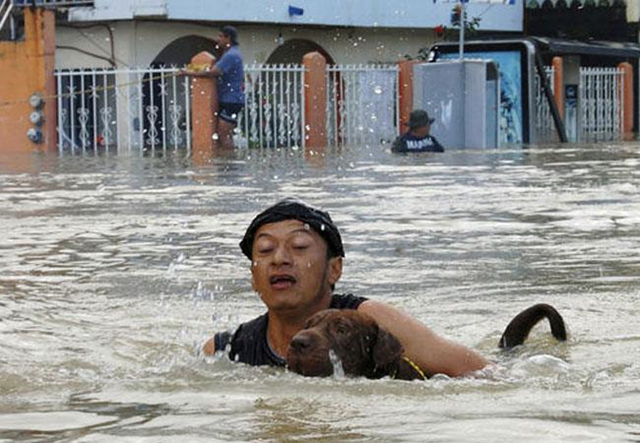 A man and his dog swim deperately through floodwaters in Acapulco, Mexico, in the aftermath of Hurricanes Ingrid and Manuel in September 2013. Photo: Dogonews
