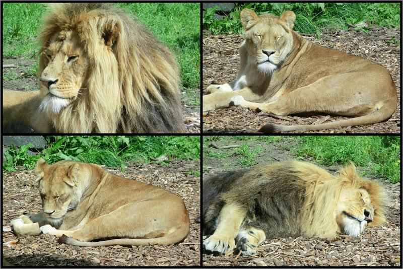 2011-08-13 zoo
