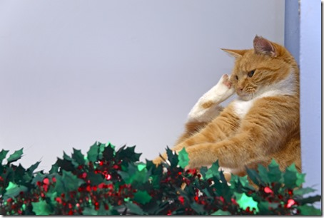 Ginger Cat playing with tinsel
