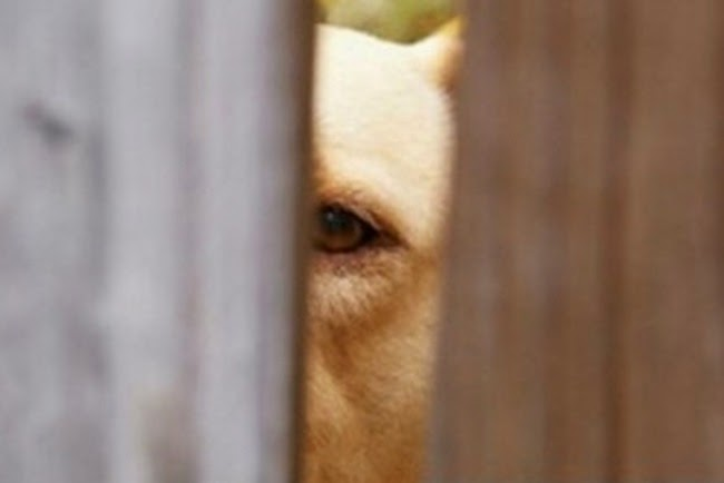 Πάστρα: Ασυνείδητος σκότωσε στο ξύλο σκυλάκι αλλά κανείς δεν τον καταγγέλλει