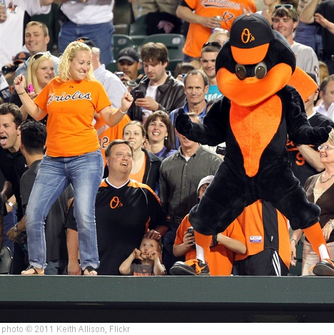 'Baltimore Orioles Bird' photo (c) 2011, Keith Allison - license: http://creativecommons.org/licenses/by-sa/2.0/