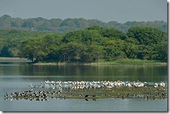 thol-lake-bird-sanctuary