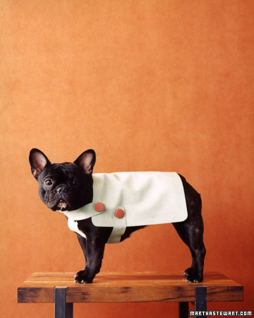 This ultrasuede dog coat is so tailored and modern. (marthastewart.com)