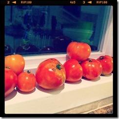 tomatsinwindow