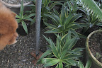 These are more agaves that will be lovely in containers this spring.