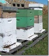 Multiple Hives