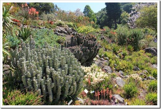 130428_UCBG_SpringSale_Euphorbia-horrida_04