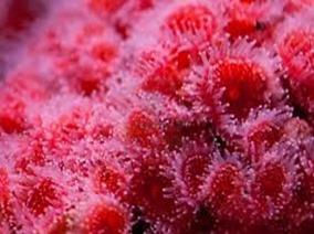 Amazing Pictures of Animals, photo, Nature, exotic, funny, incredibel, Zoo, Sea anemones, Actiniaria, Alex (10)