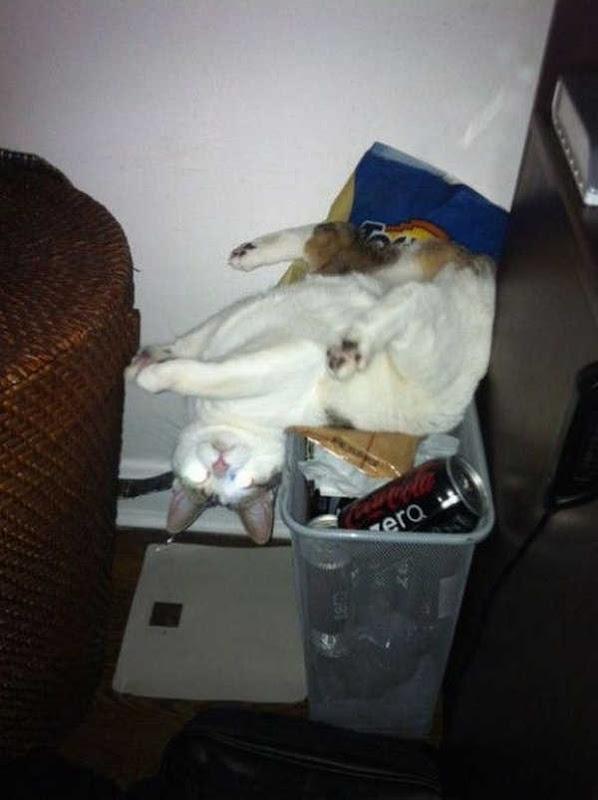 Os gatos não são muito bons em esconde-esconde 10