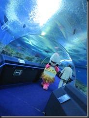 underwater 017