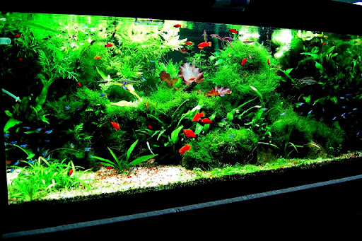 03tropical_fish_tank1.JPG