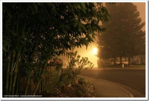 150123_fog_night3