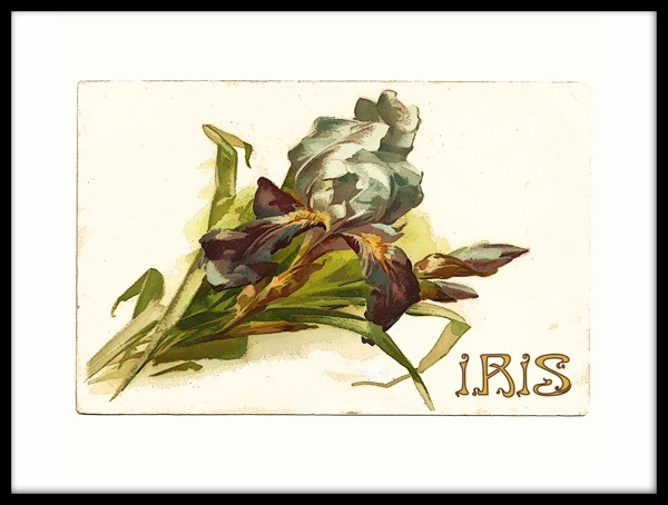 Iris post cardframe