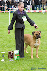 20100513-Bullmastiff-Clubmatch_31072.jpg
