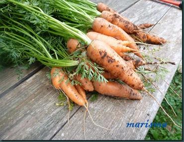 zanahorias en vinagre1 copia