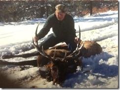 Elk 1