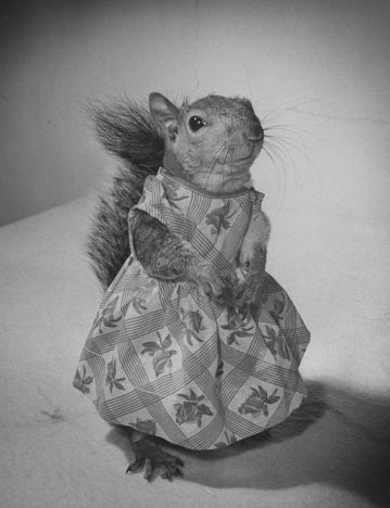 SquirrelDress