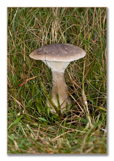 Fungi 2  Club F