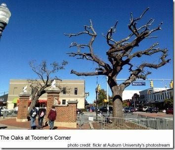 oaks-at-toomers-corner