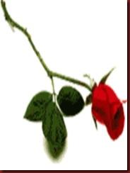 Casa 25 Benefício Recebido Uma Rosa Vermelha
