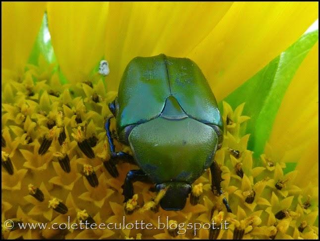 OrtoLà - La fioritura (1)