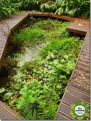 冬季水生池