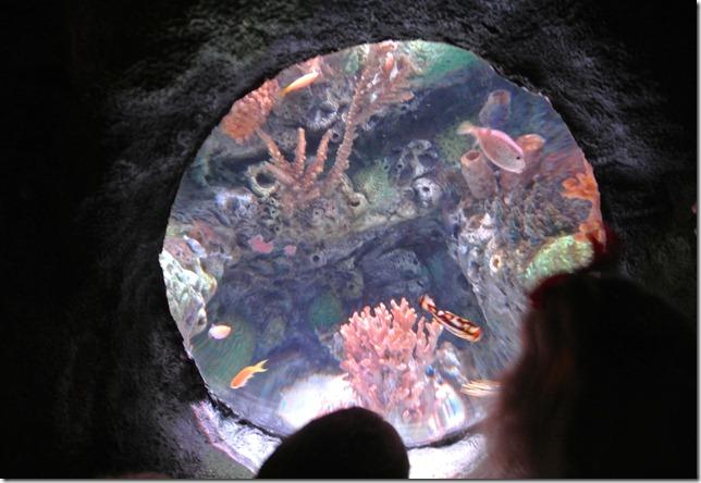 Sea Life Aquarium 105