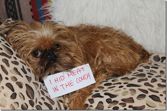 dog-shaming-bad-21