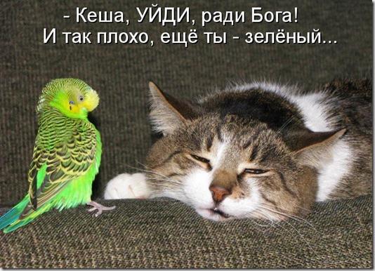 kotomatritsa_-a