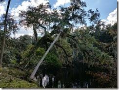 Oak & Palm over river