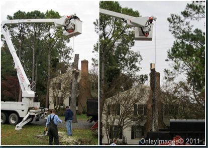 tree removal5