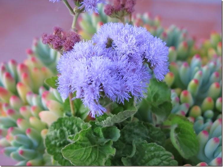 12_Flores da tia_2